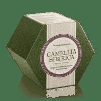 Фиточай Camellia Sibirica Камелия сибирика 3 вида